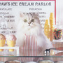 Cat Ice Cream Shop