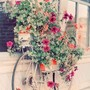 Bloomed Bike