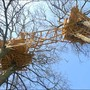 Installation, Tree Huts