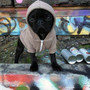 Flex Fleece Dog Zip Hoody