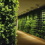 Plant Walls