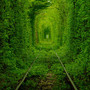 The Green Tunnel of Kleevan