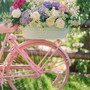 Flower and bicycle