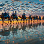 'Camels at Sunset'