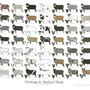 Markings in Shetland Sheep 