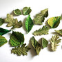 Edible Sugar Woodland Foliage