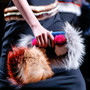 Fendi Fall 2013 Ready-to-Wear Collection
