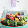 Jolie ralisation avec des cactus via